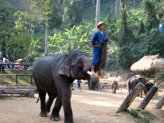 A typical example of an elephant show.