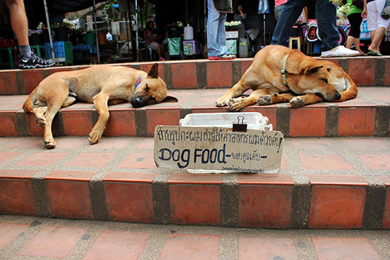 Wat dogs on the steps of Wat Phra That Doi Suthep - Chiang Mai.